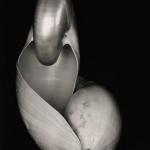 Maior coleção particular de fotografias de Edward Weston vai a leilão em Nova York