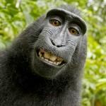 Selfie de macaco gera disputa por direitos autorais