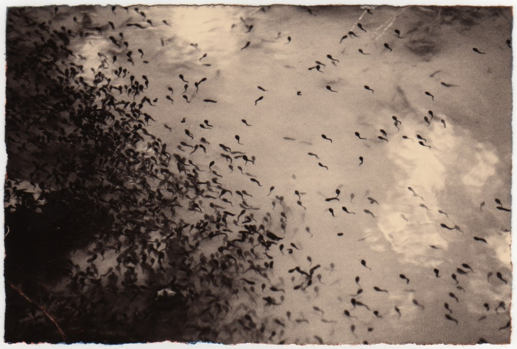 Masao Yamamoto // Galeria Marcelo Guarnieri