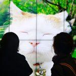 Entrevista: Katrina Sluis, curadora digital da Photographer´s Gallery, fala sobre fotografia e a cultura de imagens na internet